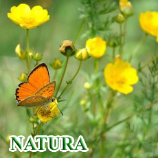 home natura